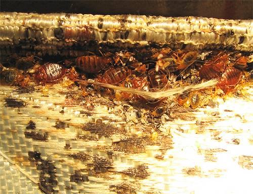 Средство от насекомых чистый дом