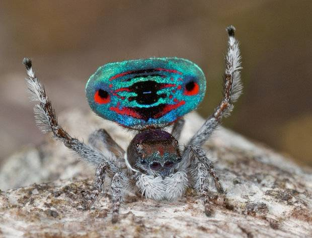 Каких пауков можно держать дома