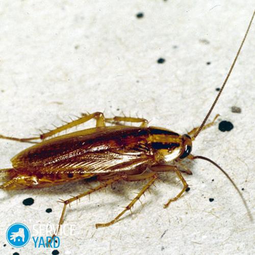Raid от тараканов