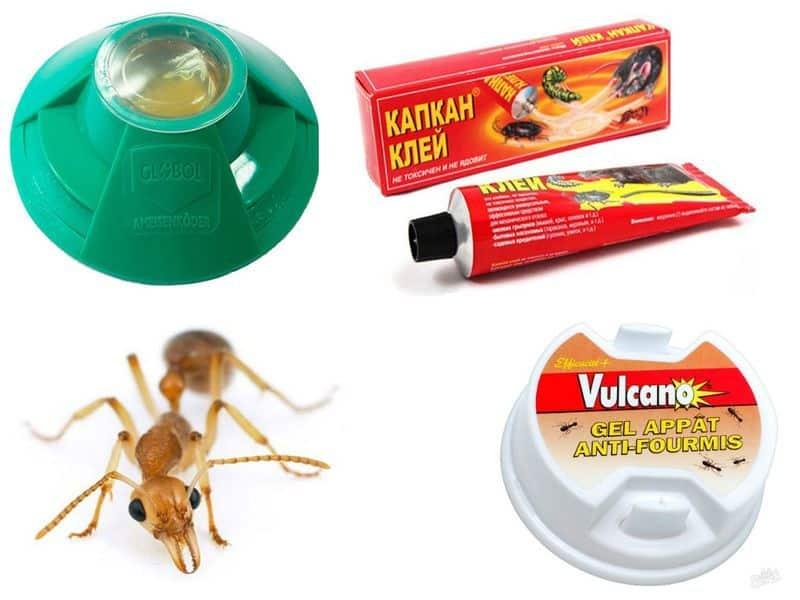 Чем вывести домашних муравьев навсегда