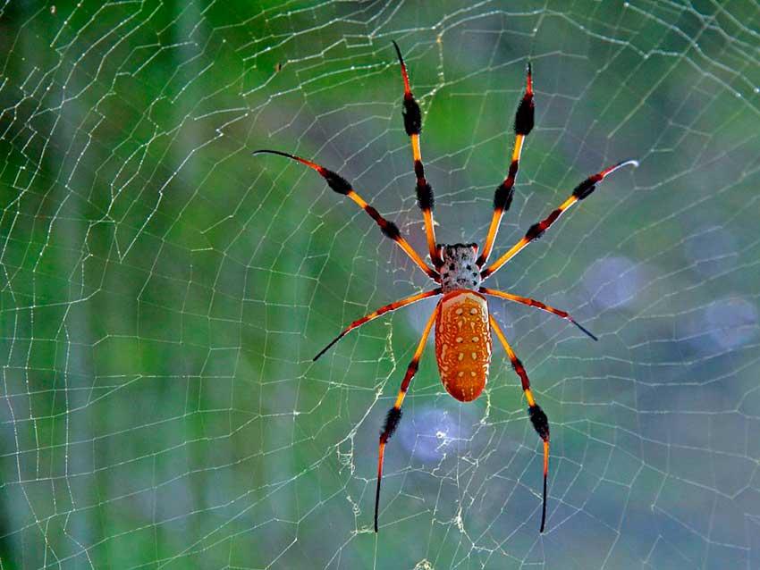 Что значит если снятся пауки