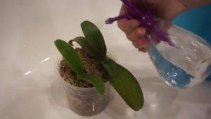 Обработка орхидей фитовермом