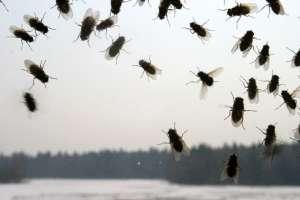 Борьба с мухами на даче