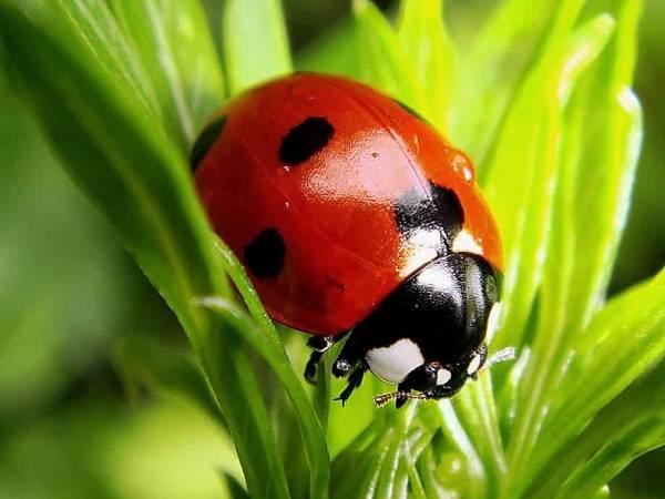 Как защитить деревья от тли и муравьев