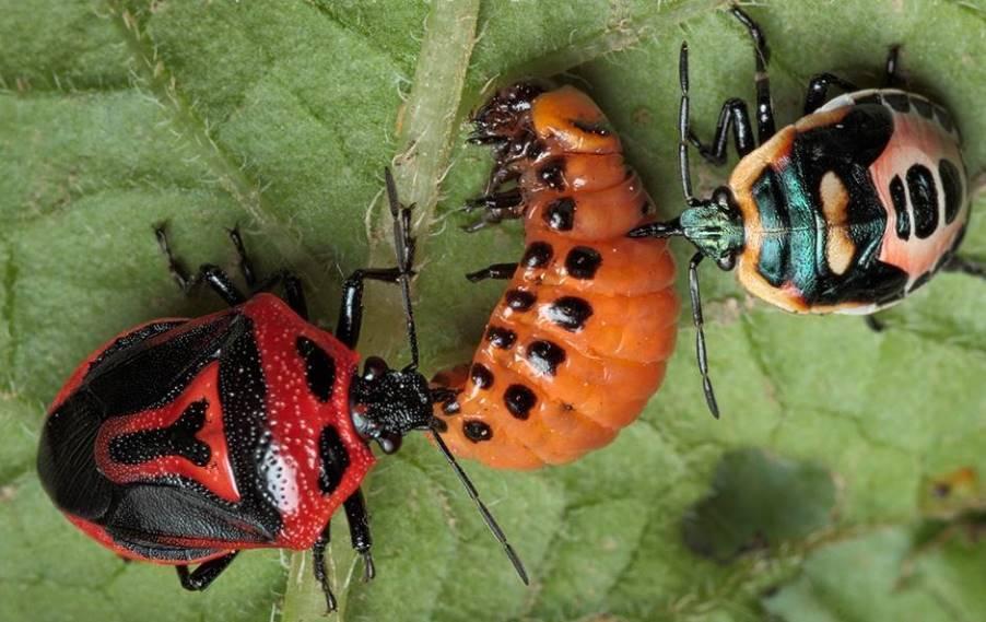 Когда появился колорадский жук в ссср