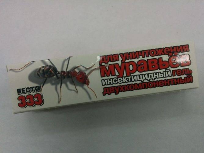 Что делать если дома завелись муравьи