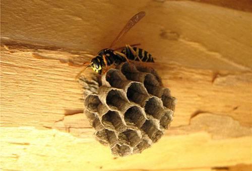Как убрать осиное гнездо на балконе