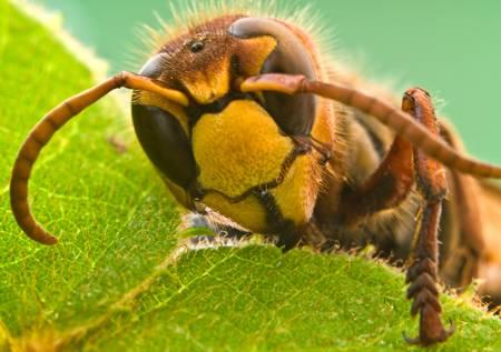 Чего боятся осы