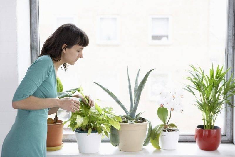 Цветочный клещ на комнатных растениях