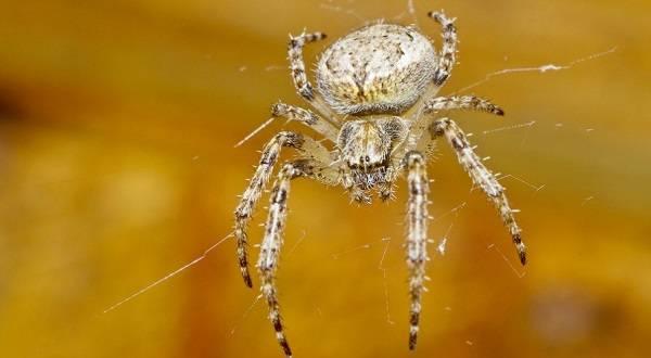Примета увидеть паука утром