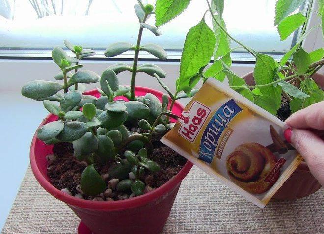 Мошки в цветочных горшках как избавиться