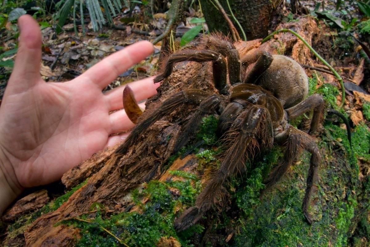 10 самых больших пауков в мире