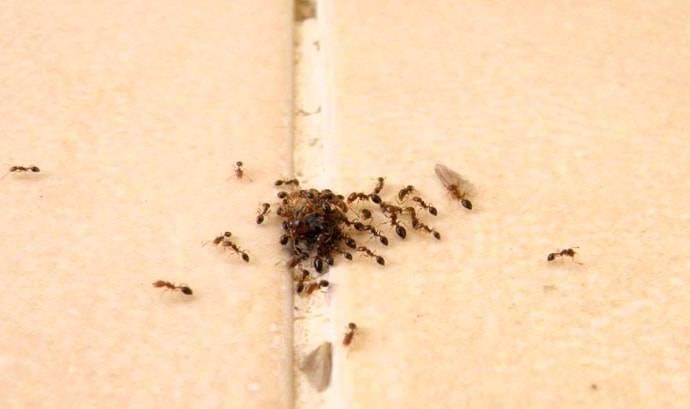 Гель от муравьев чистый дом