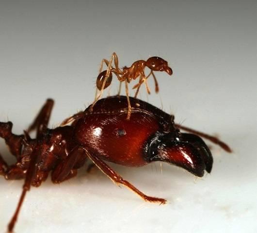 разновидности муравьев