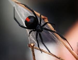 Увидеть паука вечером в доме примета