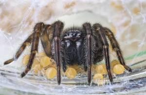 Как вывести пауков