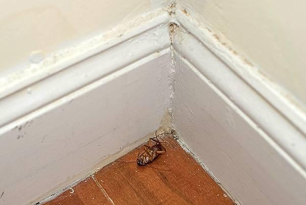 Эффективная отрава от тараканов