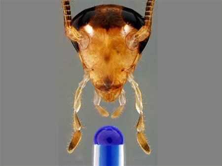 Срок жизни таракана