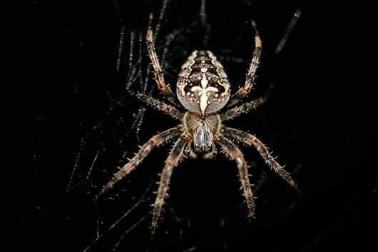 Сон про пауков что это значит