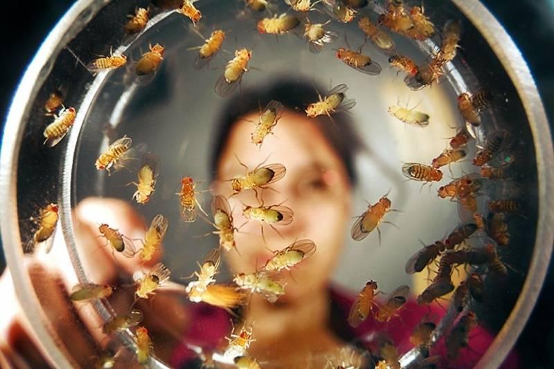 Как избавиться от мух дрозофил на кухне