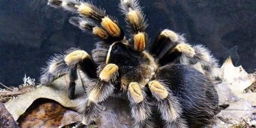 Давить во сне пауков