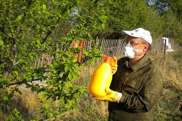 Чем обработать яблоню от плодожорки