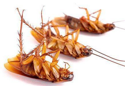 Средство от тараканов глобал