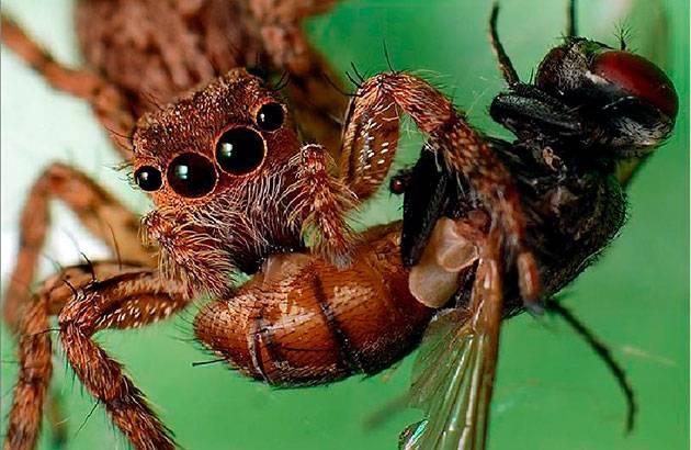 Что едят пауки в квартире