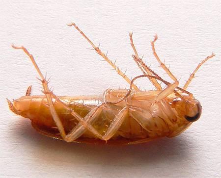 Инсектицид регент