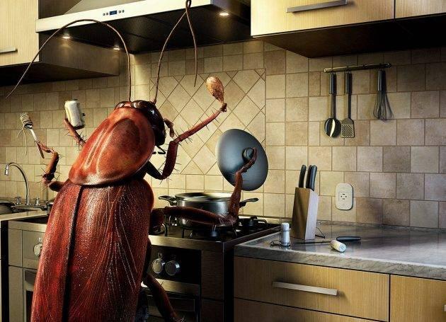 Как извести тараканов в квартире