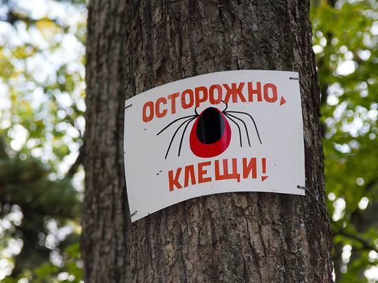 Клещи в московской области