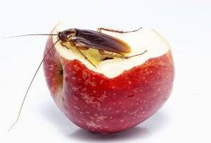 Мелкие тараканы