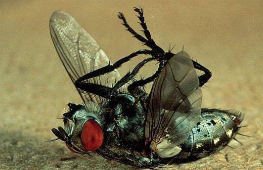 Зеленые мухи в квартире
