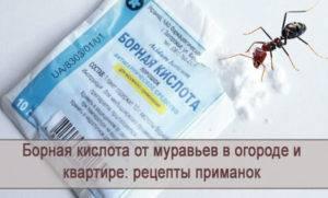 Средство от муравьев с борной кислотой