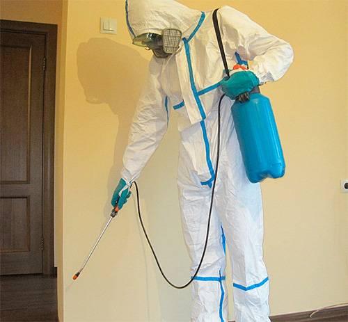 Чем потравить блох в квартире