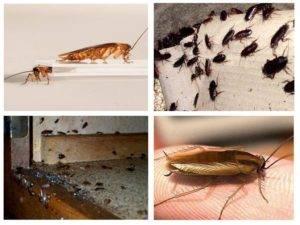 Тараканы уничтожение