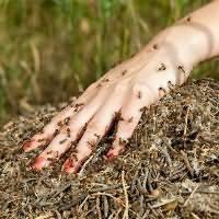 Приснились муравьи к чему это