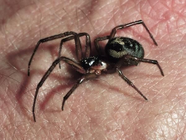 Примета увидеть паука