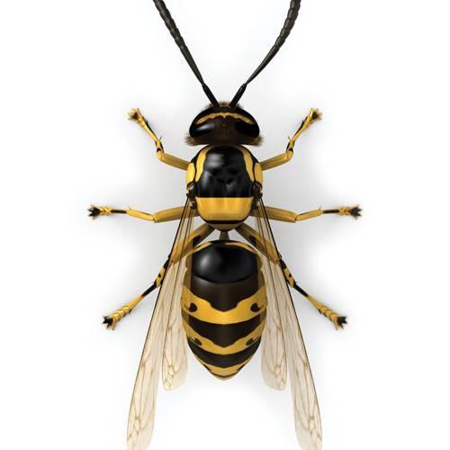Что делать при укусе осы в руку