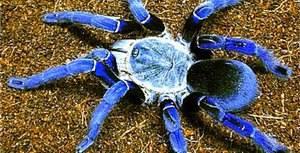 Самые крупные пауки