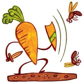 Чем обработать морковь от морковной мухи