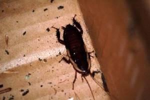 Как перестать бояться тараканов