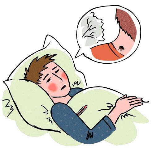 Клещ какие болезни переносит