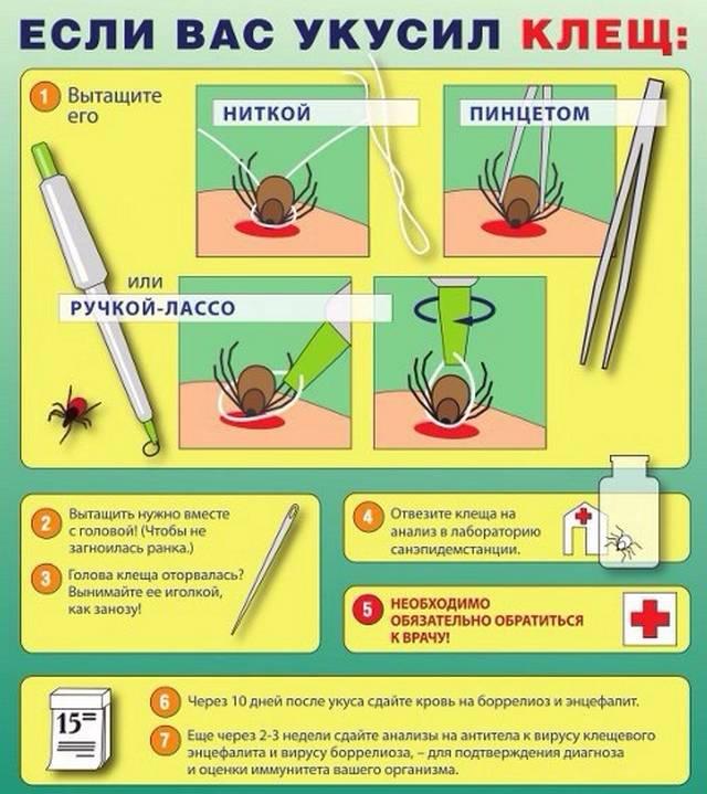 Первая помощь при укусе клеща человека