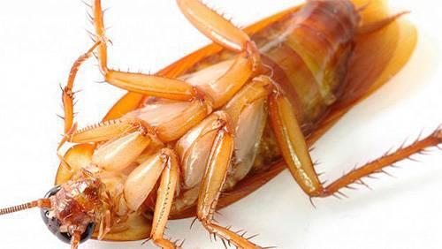 Ловушка от тараканов раптор
