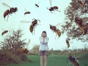 Причины нападения и укусов ос и пчёл