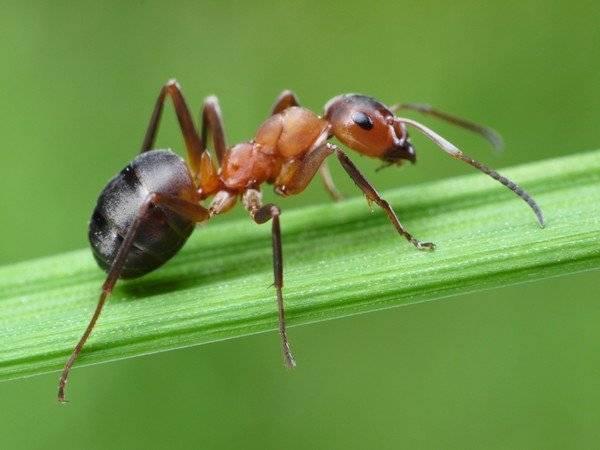 Как отличить клеща от других насекомых