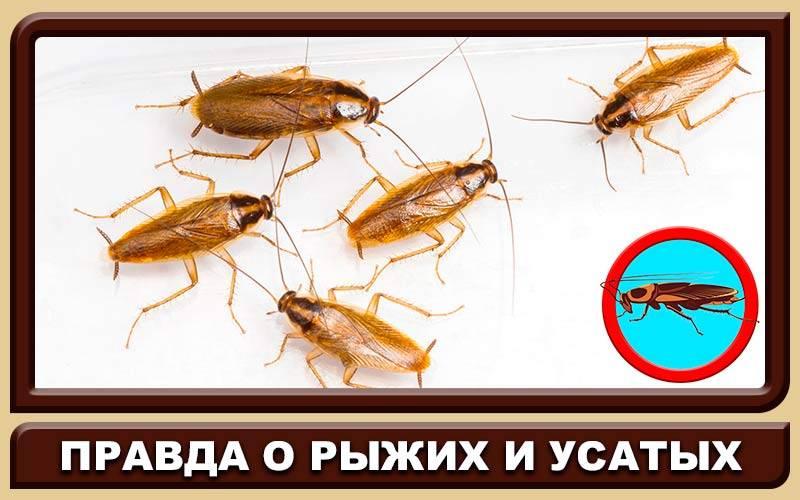 Кукарача средство от тараканов
