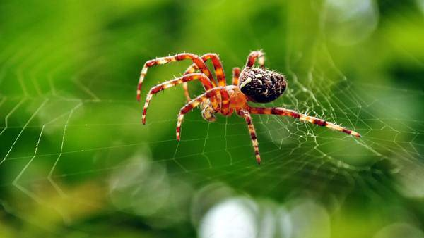 Увидеть паука днем