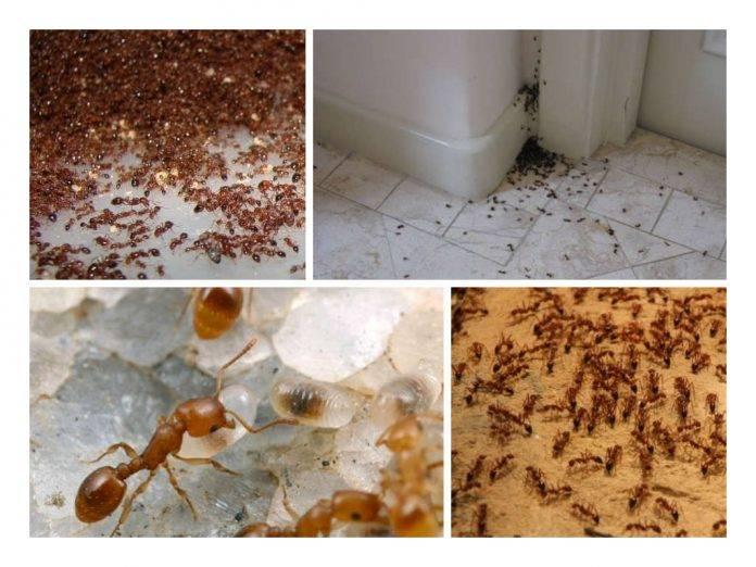 Народные средства от домашних муравьев